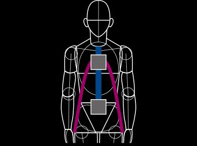 写真:体幹を3本の「骨」で支える